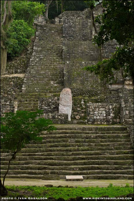 Partial view of Structure II in Calakmul. (Photo © Iván Gabaldón).