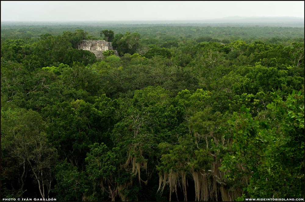 The view of Calakmul from the top of Structure II takes our breath away. (Photo © Iván Gabaldón).