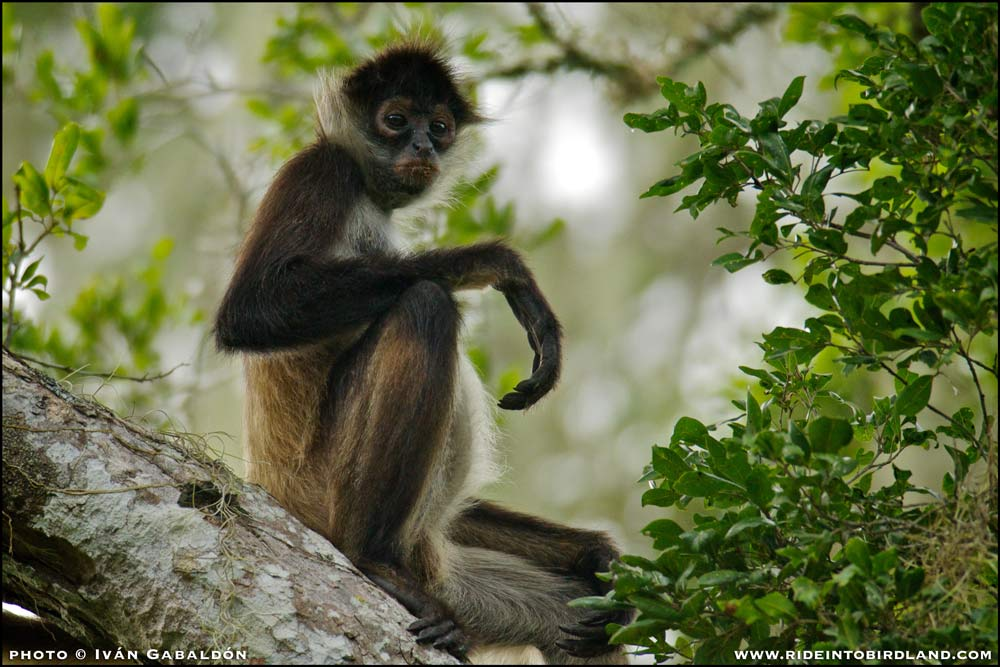It's impossible to make eye contact with the monkeys without realizing how much we are alike. (Photo © Iván Gabaldón).