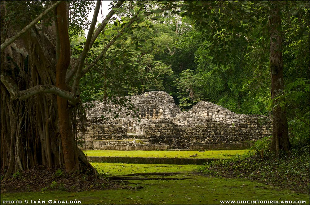 The encounter in the forest with the ruins of Becán make the visitor feel like a discoverer of lost worlds. (Photo © Iván Gabaldón).