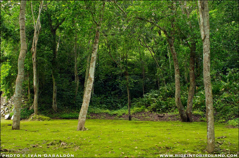 This forest garden in Xpujil transmits a feeling of peace and calm. (Photo © Iván Gabaldón).