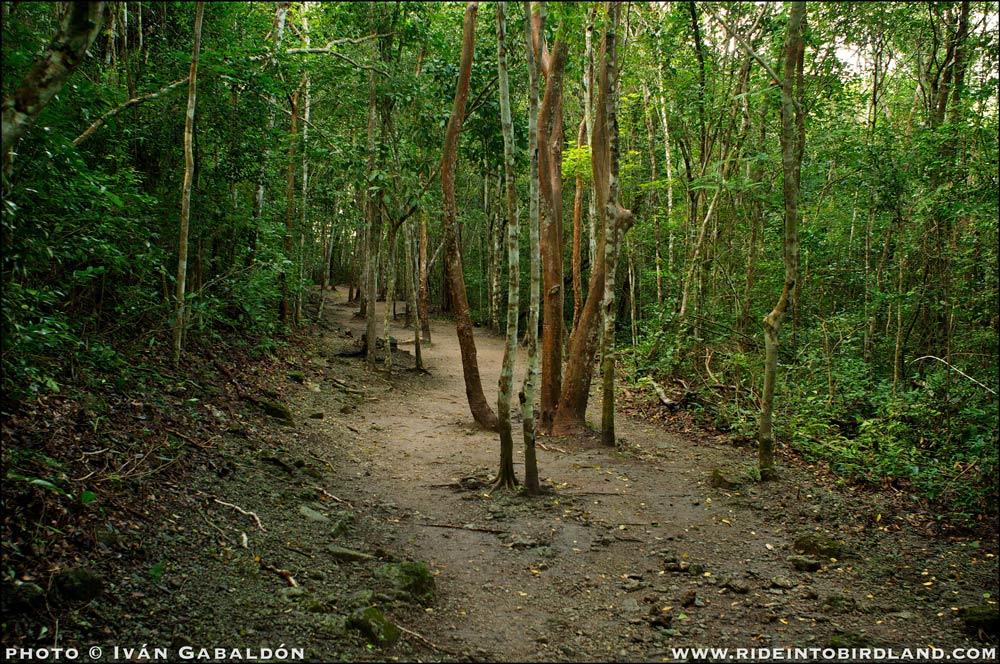 Trail of the Mayan world. (Photo © Iván Gabaldón).