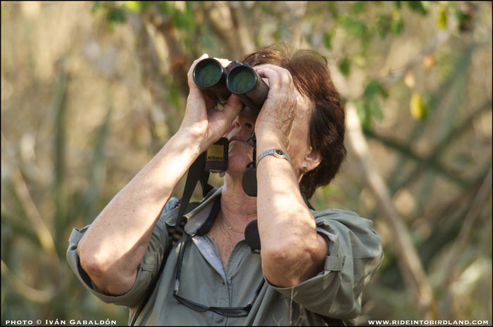 Barbara MacKinnon, engaged in bird observation. (Photo © Ivan Gabaldon).