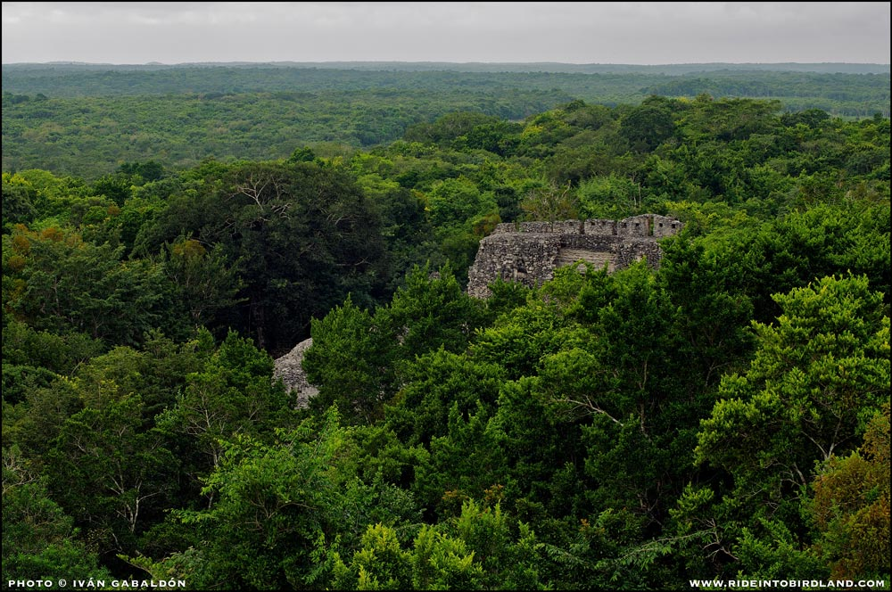 Calakmul, UNESCO world heritage sight. (Photo © Ivan Gabaldon).