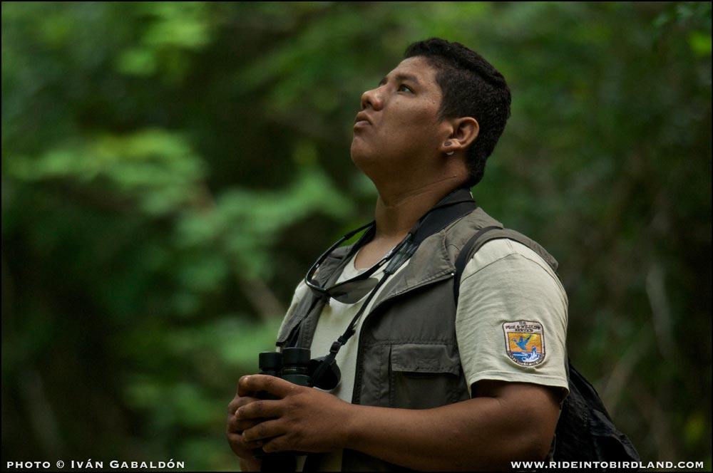 Luis looks for birds on the edge of the road. (Photo © Ivan Gabaldon).