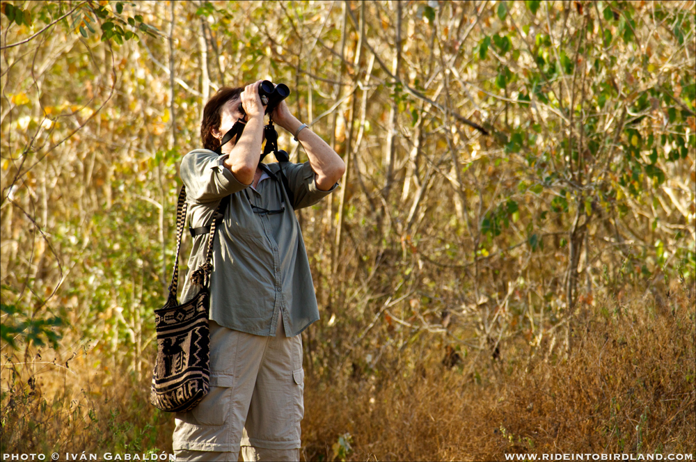 Barbara scans the trees for birds during our outing together. (Photo © Iván Gabaldón).
