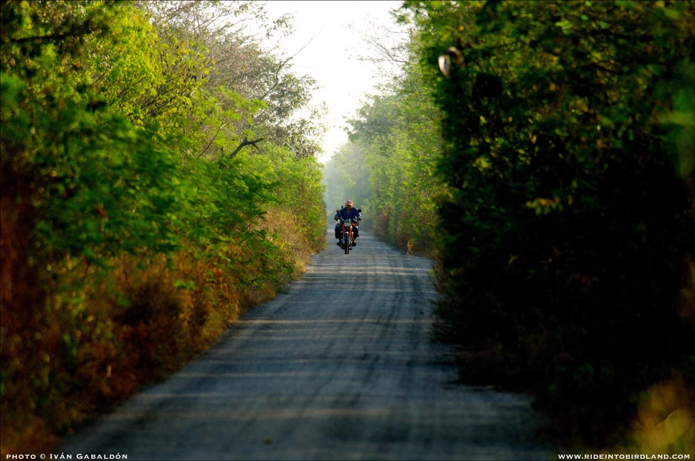 A narrow, vegetation lined road typical of the Yucatan Peninsula, near Dzilam de Bravo. Opportunities for spotting birds abound! (Photo © Iván Gabaldón).