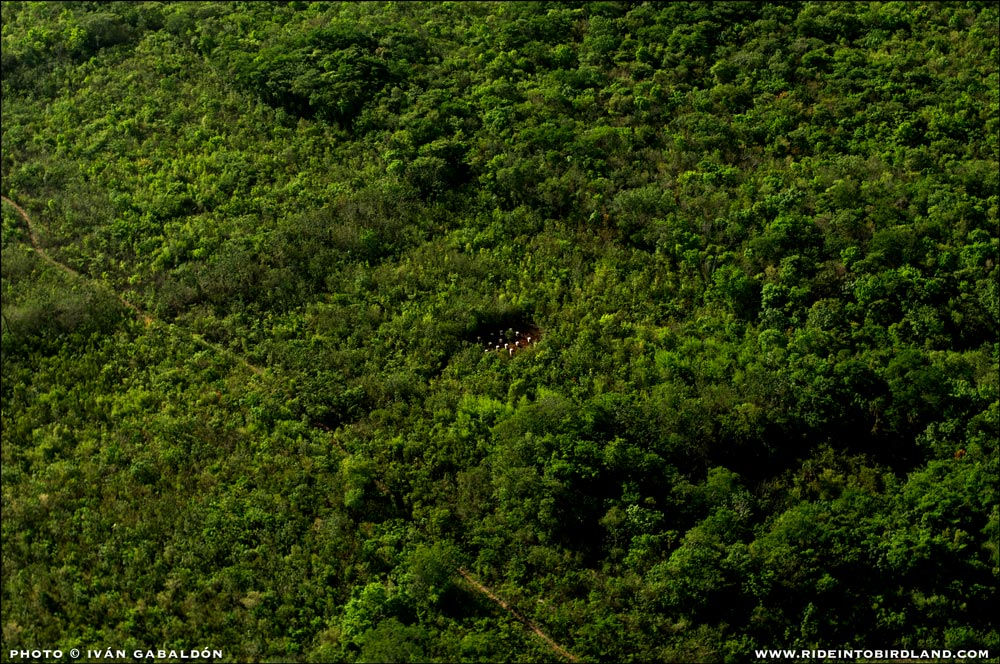 A perfect example of man's non-disruptive alliance with nature: beehives used to harvest organic honey have no negative impact on the environment and benefit the local economy. (Photo © Ivan Gabaldon - Aerial support provided by Lighthawk to Pronatura Peninsula de Yiucatan).
