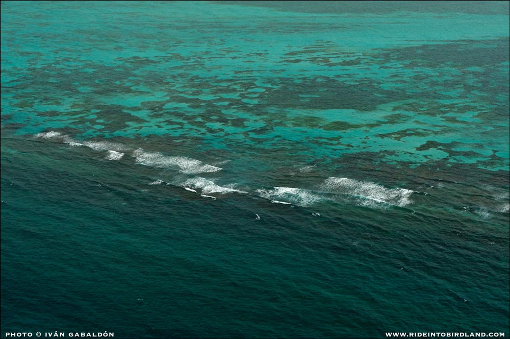 The Caribbean Sea in all the splendor of its seductive blue palette. . (Photo © Ivan Gabaldon - Aerial support provided by Lighthawk to Pronatura Peninsula de Yucatan).