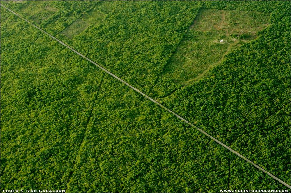La mano del hombre es evidente cuando el paisaje es cruzado por una línea recta, como esta carretera. (Foto © Iván Gabaldón - Soporte aéreo provisto por Lighthawk para Pronatura Península de Yucatán).