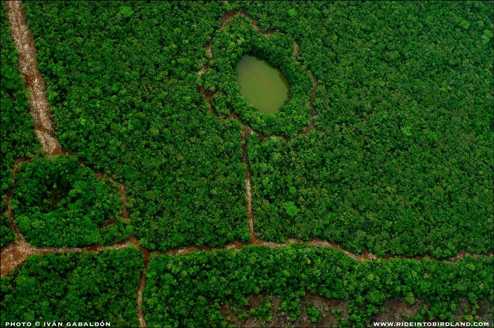 Un hallazgo sorprendente: ¡una flor dibujada en el paisaje!. (Foto © Iván Gabaldón - Soporte aéreo provisto por Lighthawk para Pronatura Península de Yucatán).