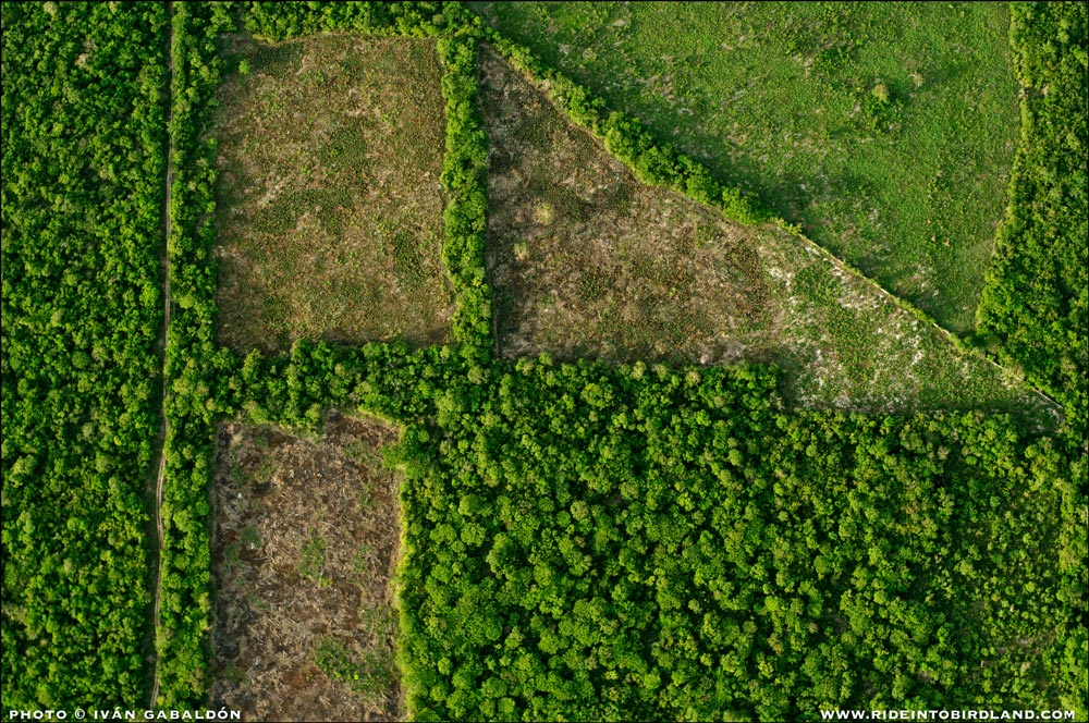 Human activity carves out geometric patches of forest. (Photo © Ivan Gabaldon - Aerial support provided by Lighthawk to Pronatura Peninsula de Yiucatan).
