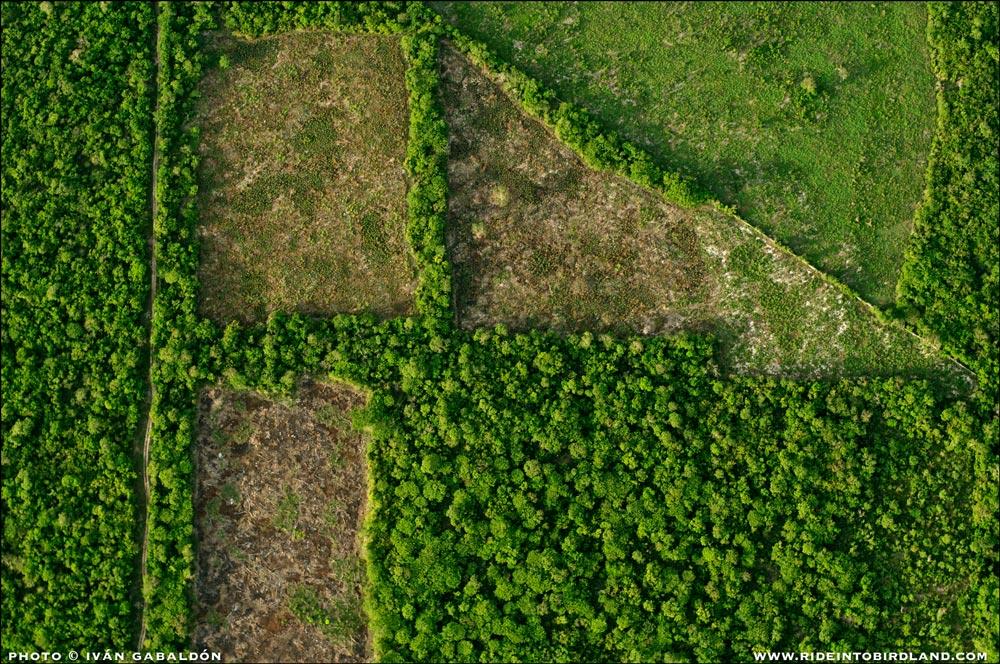 La actividad humana talla figuras geométricas en la selva. (Foto © Iván Gabaldón - Soporte aéreo provisto por Lighthawk para Pronatura Península de Yucatán).