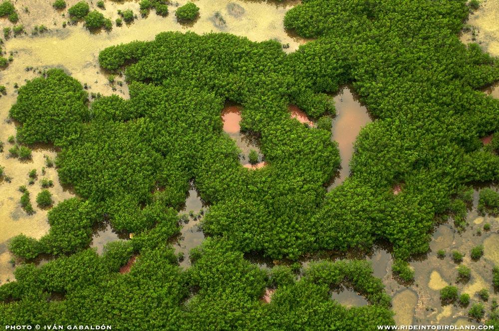 Los manglares son una pieza vital del gran motor de la naturaleza, ya que actúan como filtros naturales y áreas de reproducción. (Foto © Iván Gabaldón - Soporte aéreo provisto por Lighthawk para Pronatura Península de Yucatán).