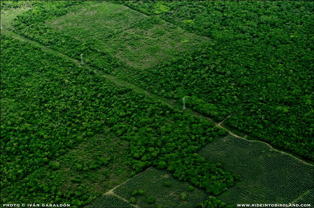 Otra línea recta sobre el paisaje, esta vez dibujada por líneas eléctricas. (Foto © Iván Gabaldón - Soporte aéreo provisto por Lighthawk para Pronatura Península de Yucatán).