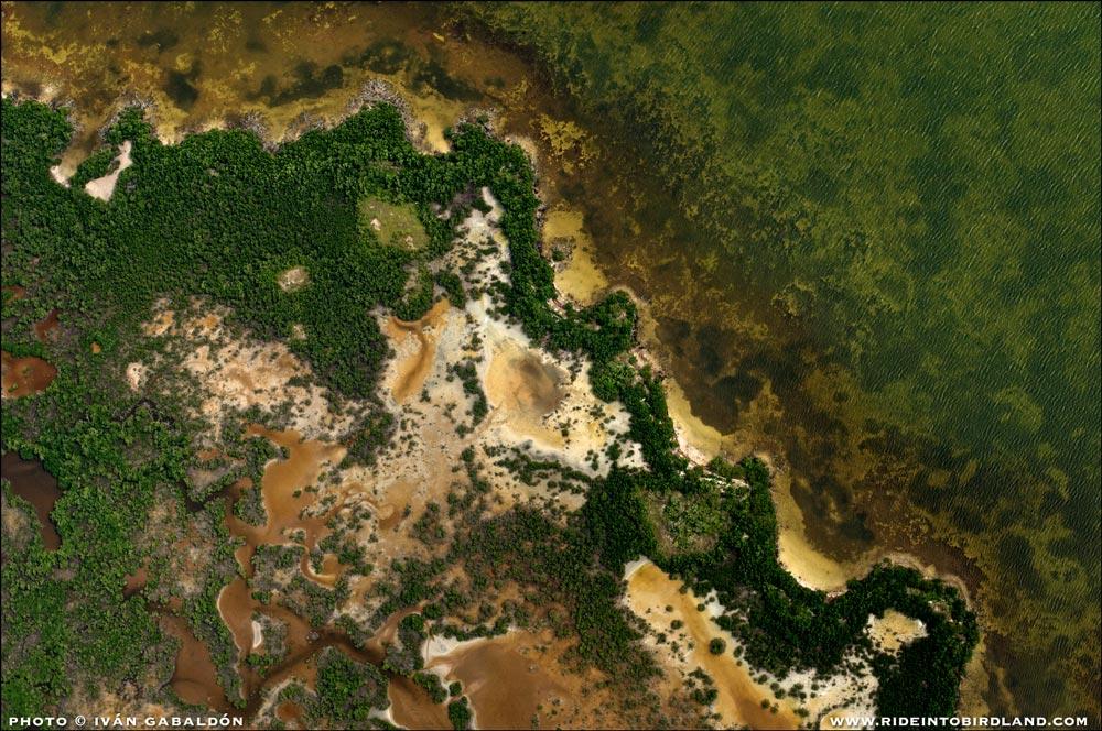 """La naturaleza crea """"arte orgánico abstracto"""" al mezclar mar, arena, vegetación y química del agua allí donde la tierra y el océano se encuentran. (Foto © Iván Gabaldón - Soporte aéreo provisto por Lighthawk para Pronatura Península de Yucatán)."""