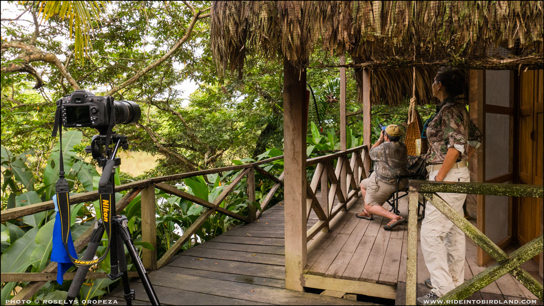 Francisco Hernández y Carmen Cabañas disfrutan desde la veranda del chalet el espectáculo de los Monos Aulladores. (Foto © Roselys Oropeza).