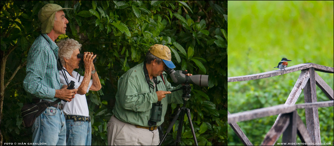 Paul Wood, Joann Andrews y Francisco Hernández observan un ejemplar de Martín Pescador de Collar (Megaceryle torquatus). (Foto © Iván Gabaldón).