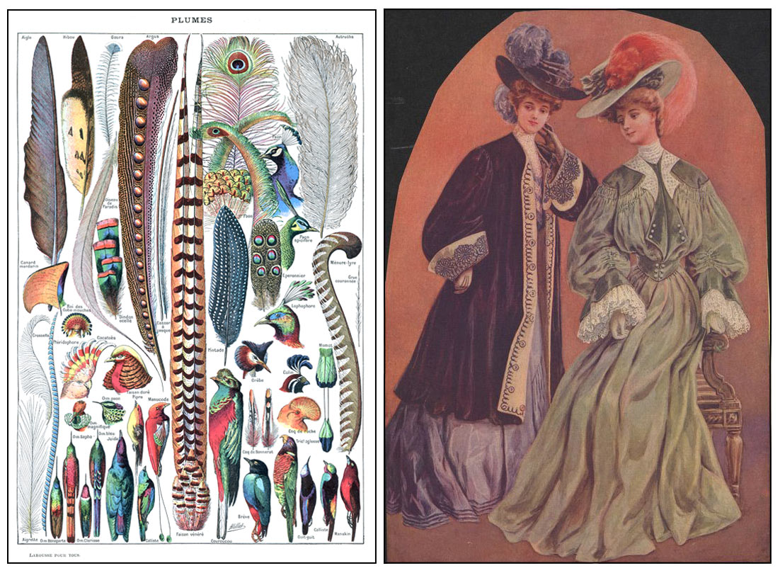 Left: Feathers for decorative use. Illustration by Adolphe Millot (1857-1921), published in the 1907-1910 edition of the Larousse encyclopaedic dictionary. Right: Ladies with feathered hats, fashion magazine illustration, 1903. (Images: Public domain - Wikipedia).